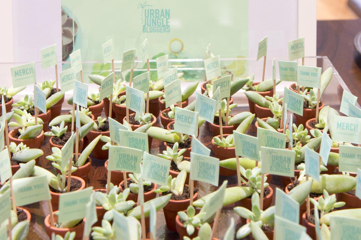 joelix UJB baby succulents