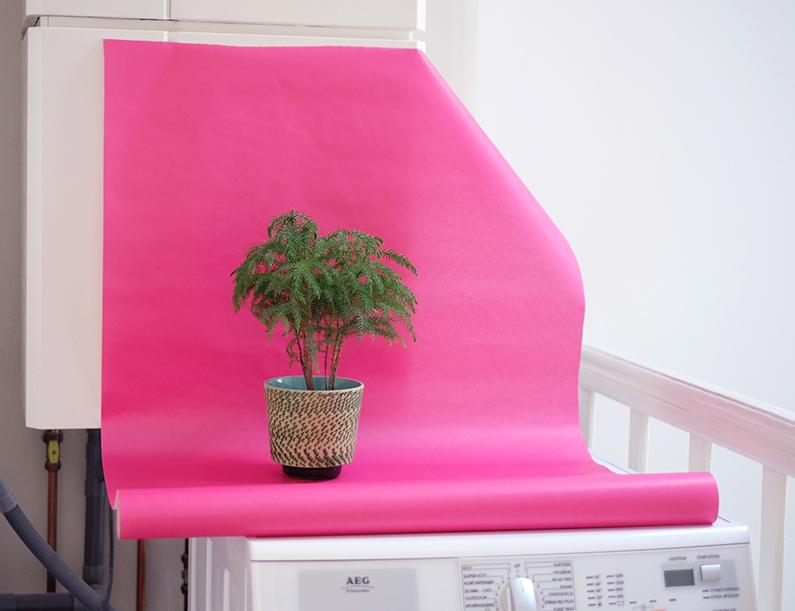 PlantColorPop_behind-the-scenes