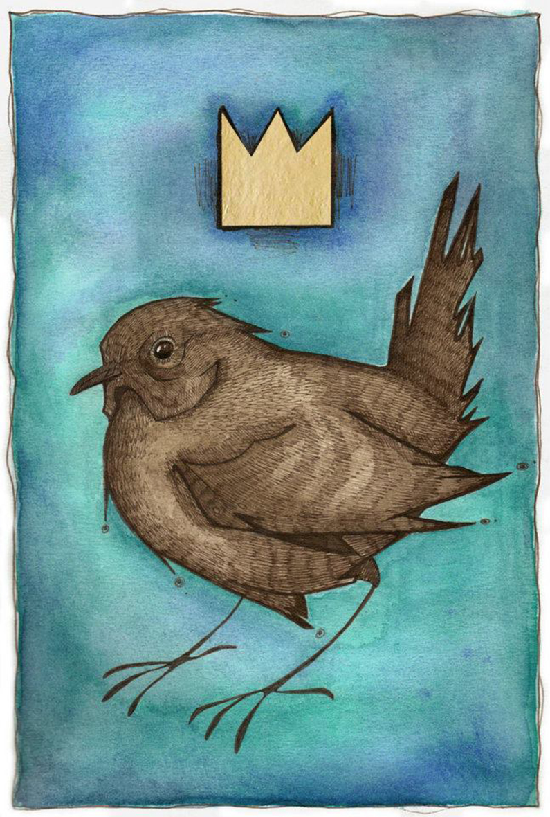 Matt-Hayton_Bird-Book-Wren-King