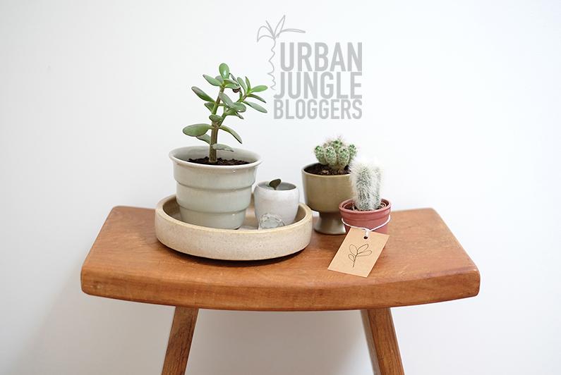 UJB-dec15_plantygift1a