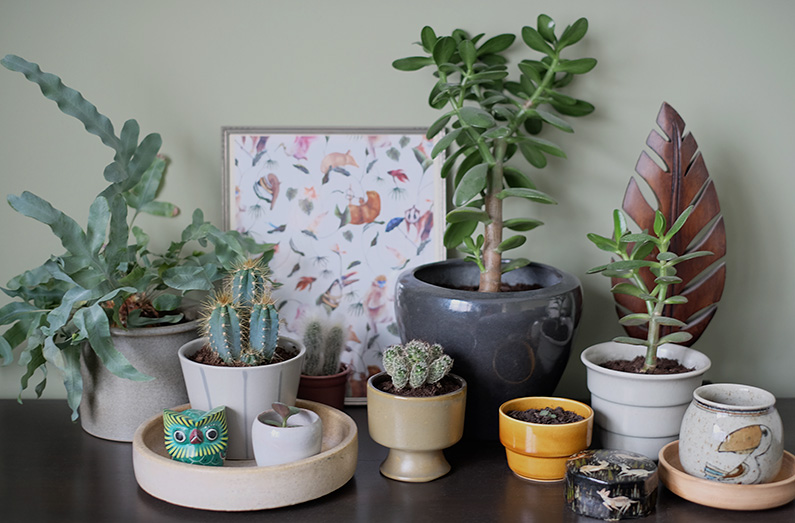 UJB-jungle_plants