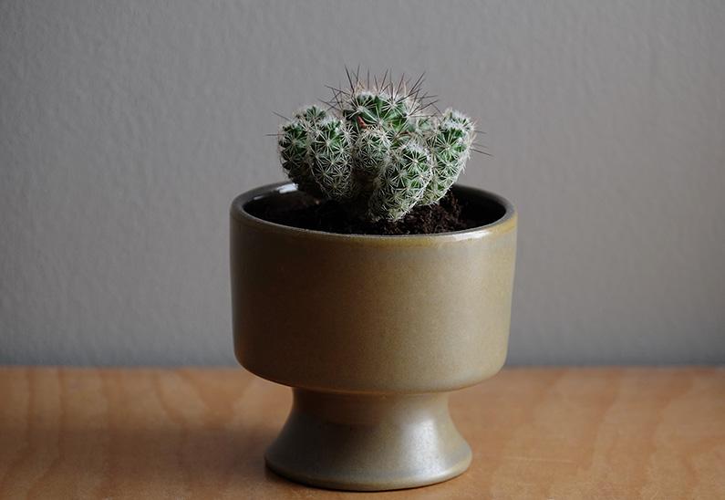UJB-zoom_cactus1