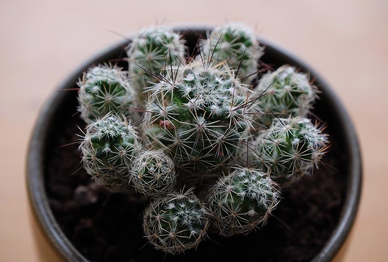 UJB-zoom_cactus2