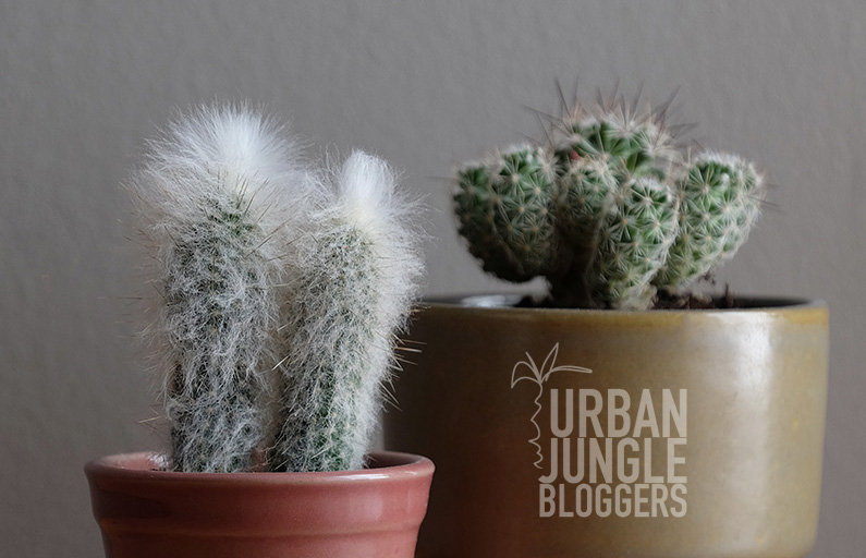 Urban Jungle Bloggers: Botanical zoom
