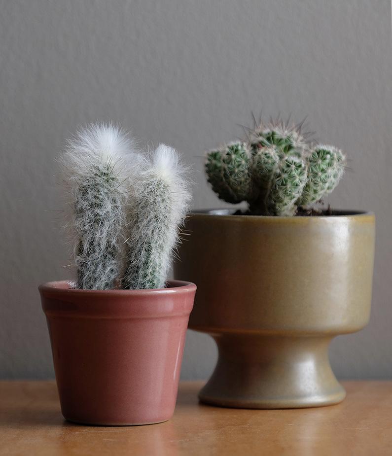 UJB-zoom_fuzzy-cacti