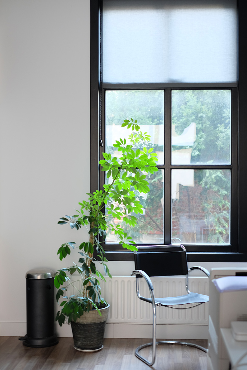 Visualstrands_officewindow_plant