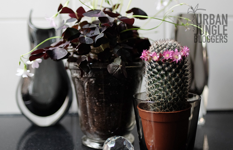 Urban Jungle Bloggers: Plants & Glass