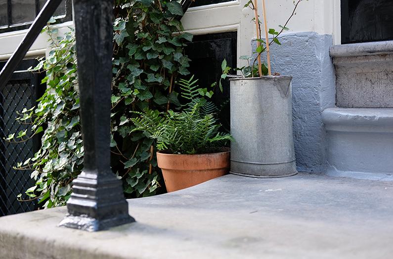 greenwalk2_fern-steps
