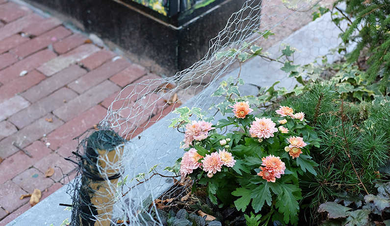 greenwalk2_flowerbed
