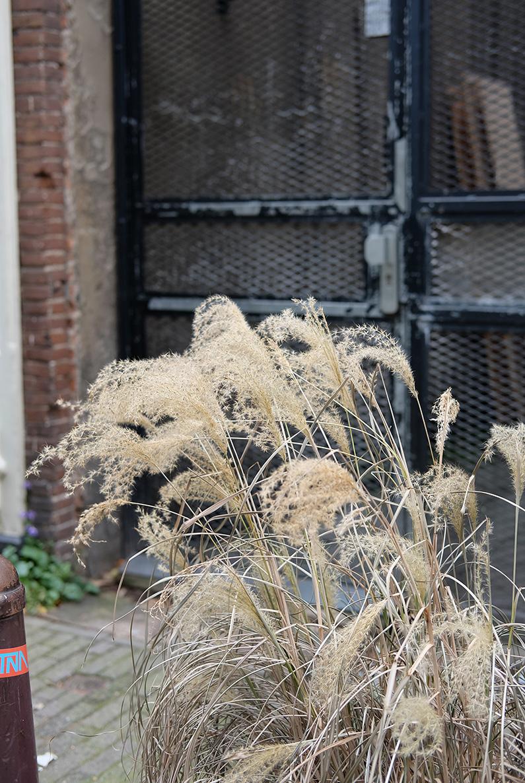 greenwalk2_grasses