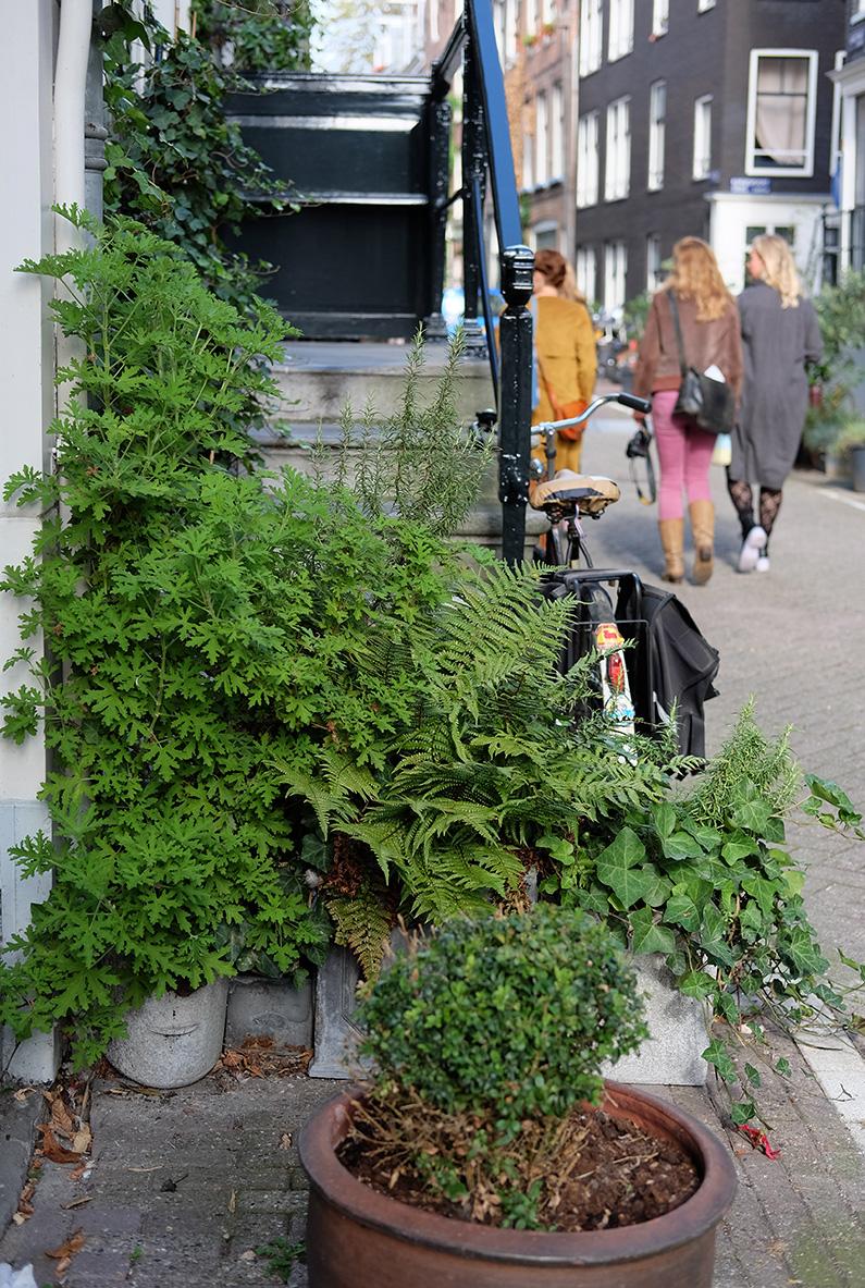greenwalk2_green-steps
