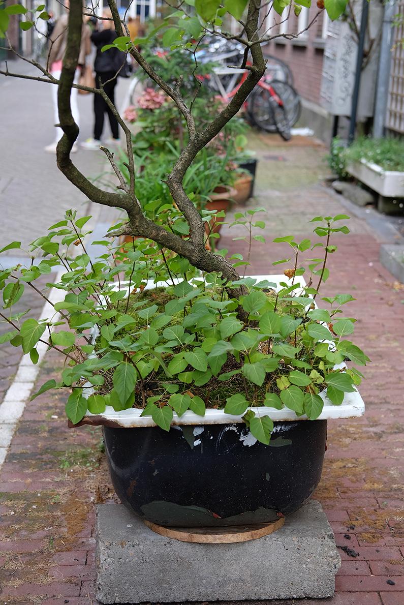 greenwalk2_green-tub
