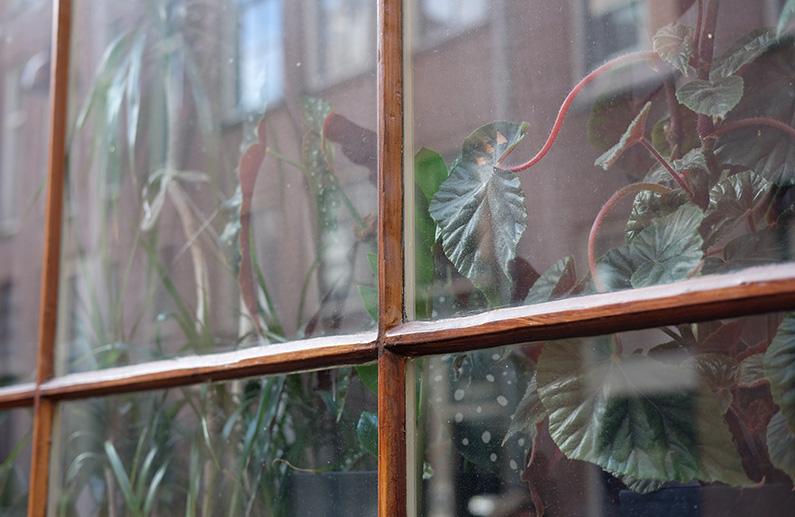 greenwalk2_plants-in-window2