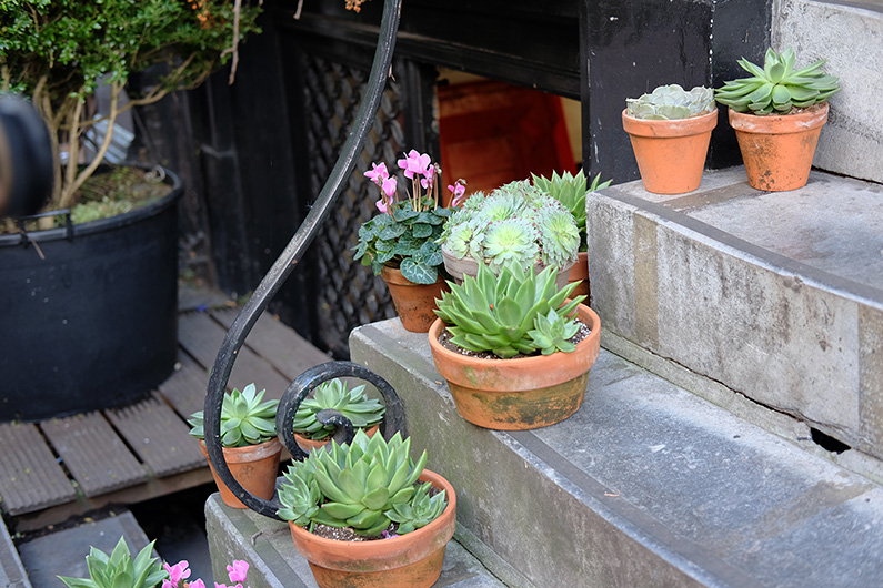 greenwalk2_succulents-on-steps