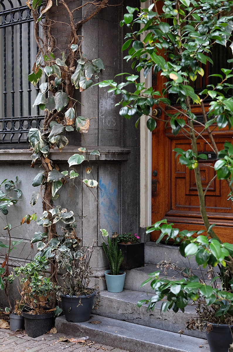 greenwalk2_this-old-house