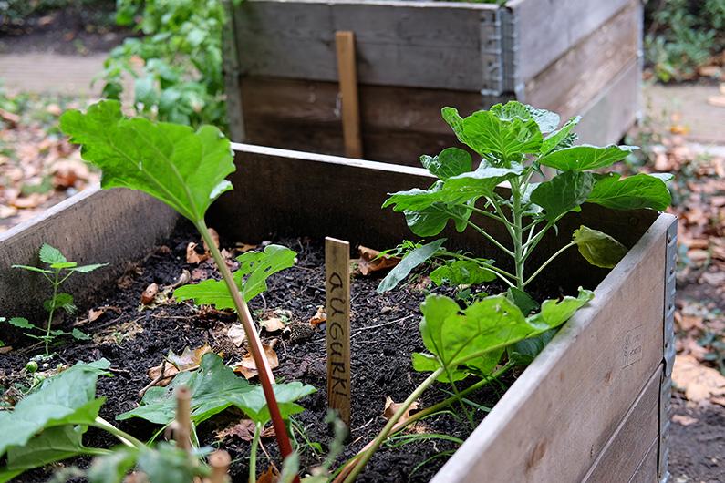 greenwalk2_urban-veg